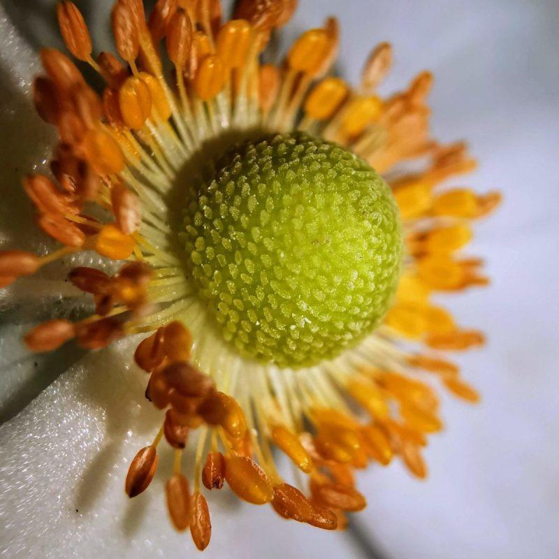 Blüte Makrofoto